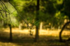 天在森林里 图库摄影
