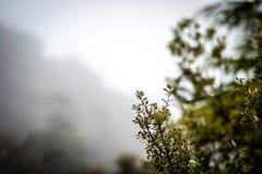 天在森林里 库存图片