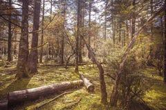 晴天在森林里 库存照片