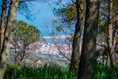 天在海的森林里 图库摄影