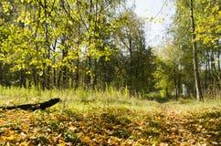 晴天在秋天森林里 免版税库存图片