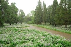 天坛公园植物 免版税图库摄影