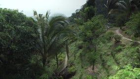 天堂公园农厂苏梅岛股票英尺长度录影的美好的热带植被 股票视频