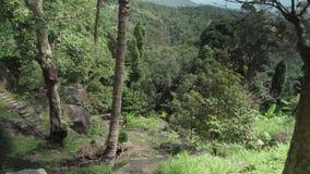 天堂公园农厂苏梅岛股票英尺长度录影的美好的热带植被 股票录像