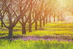 天堂明亮的太阳和领域与自然温暖的概念和情感颜色和至善至美的秀丽与copyspace 免版税库存图片
