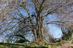 天堂树在俄勒冈 图库摄影