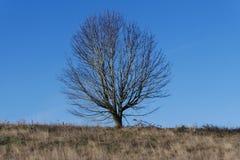 天堂树在俄勒冈 库存照片
