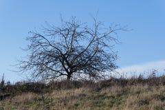 天堂树在俄勒冈 库存图片