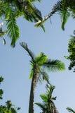 天堂棕榈树 图库摄影