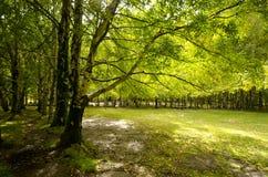 天堂森林 库存图片