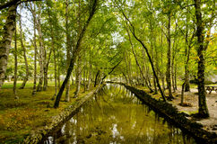天堂森林 免版税库存图片