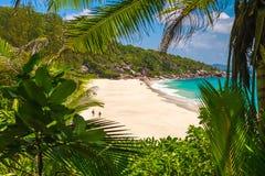 天堂海滩和密林 库存图片