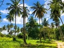 天堂热带海岛美丽的棕榈树丛 库存照片