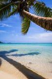 天堂热带海滩和盐水湖在Moorea海岛 免版税库存图片