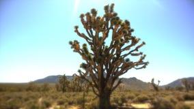 天堂的约书亚树 免版税图库摄影