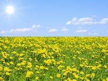 天堂般的草甸 图库摄影