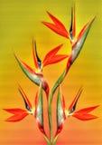 天堂鸟在橙色和黄色背景的花 免版税库存图片