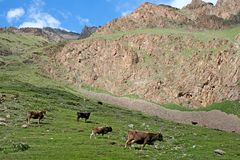 天山山,吉尔吉斯斯坦 图库摄影