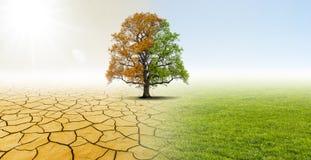 天旱和绿色自然 库存照片