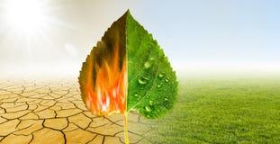 天旱和绿色自然 免版税库存图片