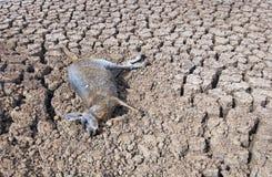 天旱在澳大利亚 免版税库存图片