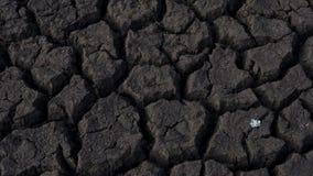 天旱影响了农田,当大镇压和一棵小植物通过 免版税图库摄影