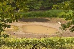 天旱池塘 库存图片