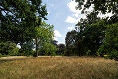 天旱2018年-伦敦,所有干的英国公园  免版税图库摄影