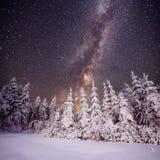 满天星斗的天空和树在树冰 免版税图库摄影