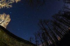 满天星斗的天空的Fisheye视图与被弄脏的行动云彩的,夺取从稀稀落落的山毛榉森林地 大熊座或七星在Th 免版税图库摄影