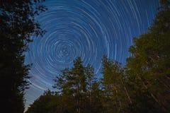 满天星斗的天空背景的森林 免版税库存图片