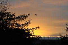 天气和太阳日落在卡斯特鲁普,丹麦 免版税库存图片