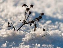 天气今天冷的 免版税库存图片