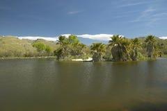 天然泉和棕榈树,在阿瓜峡谷的一片自然绿洲在图森, AZ 免版税库存图片