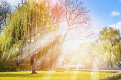 天然泉风景、太阳的光芒在树背景和开花的花 免版税图库摄影