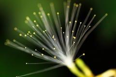 天然纤维光学 库存照片