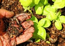 天然肥料蠕虫 图库摄影