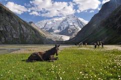 天狮单在吉尔吉斯斯坦 免版税图库摄影