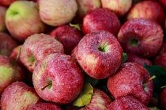 天生爱新鲜的成熟华盛顿苹果被洗涤的` s雨 库存照片