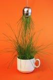 天生被创造的茶 免版税图库摄影