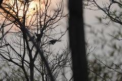 天的三pigions结尾,在渤海附近 库存图片