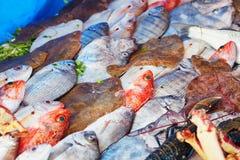 天的抓住在一个传统摩洛哥市场(souk)上的在索维拉,摩洛哥 免版税图库摄影
