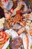 天的抓住在一个传统摩洛哥市场(souk)上的在索维拉,摩洛哥 库存照片