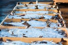 天的抓住-在运输货柜的鲜鱼 免版税库存照片