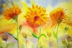 天真万寿菊 五颜六色的水彩绘画 免版税库存照片