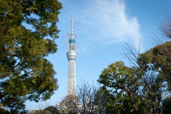 天空东京结构树 库存照片