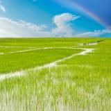天空云彩和沼泽地背景镜象 免版税库存图片