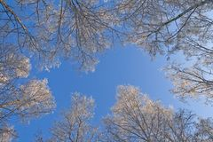 天空冬天 库存照片