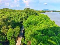 天空单独自由风可能mangroveforest美洲红树森林woodbride河保存新鲜绿色树的自然放松的观点 免版税库存照片