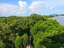 天空单独自由风可能mangroveforest美洲红树森林woodbride河保存新鲜绿色树的自然放松的观点 免版税库存图片